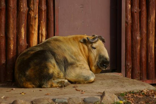 Животные разные - Страница 4 141876--49820767-m549x500-u45c41