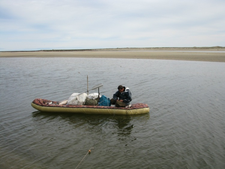 лодка налим 150 цена