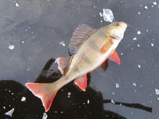 рыбалка на реке юрас